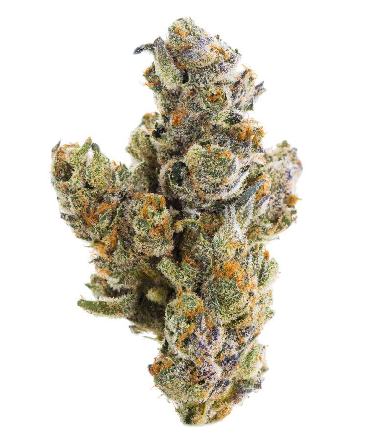 Develop Your Own Jungle Boys Marijuana Plants