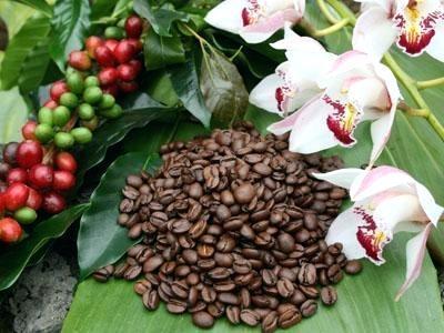 Best Place To Buy Kona Coffee